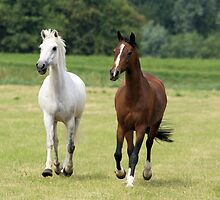 Lovely white and brown horses by theheijt