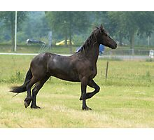 Sideway Friesian horse Photographic Print