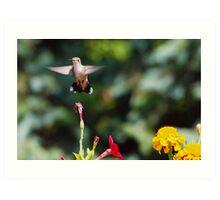 Humming Bird! Art Print