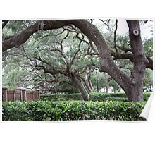 Majestic Live Oaks Poster