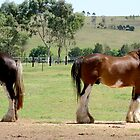 Clydesdales - Mare and Stallion by chelka09