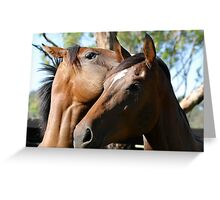 Thoroughbred Fillies playing Greeting Card
