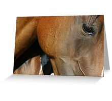 close-up thoroughbred filly 1 Greeting Card