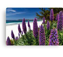 Carmel Beach Spring Canvas Print