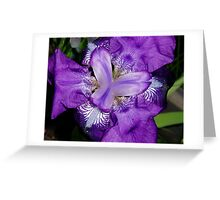 """""""Butterfly"""" Iris Greeting Card"""