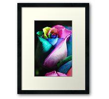 Rainbow Roses 14 Framed Print
