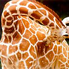 Giraffe by Jay Gross