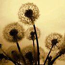 Dandelion Bouquet by funkyfacestudio
