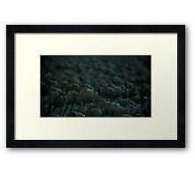 Blue Tulips Framed Print