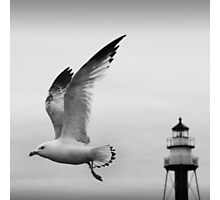 Come fly away Photographic Print