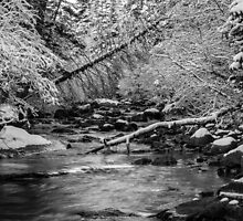 St. Vrain Creek, Rocky Mountains, Colorado by Dane Strom
