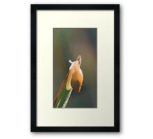 Brilliant little snail Framed Print