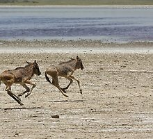 Full Gallop by Nickolay Stanev