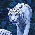 White Tiger by Erin-Louise Hickson