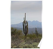 Saguaro, MacDowell Mountain Regional Park Poster