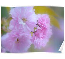 Blossom Sunday Poster