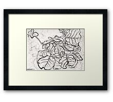 Young Sea Grape Framed Print
