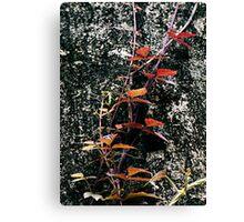 Red Creeper Canvas Print