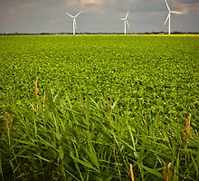 Wind Harvest by Paul Davey
