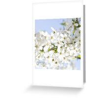 White Cherry Blossom Greeting Card