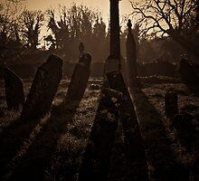 Shadows by Janine Branigan