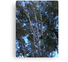Trees, Branches, Leaves and Blue Sky in Late Afternoon Light Canvas Print