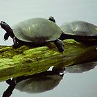 Turtles Bathing in the Sun by Mary Campbell