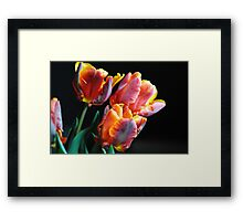 Red and Orange Tulips Framed Print