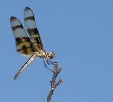 Metalic Dragonfly by CynLynn