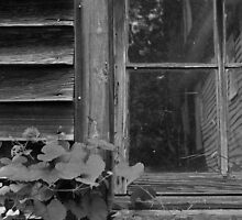Window in B&W by bcollie