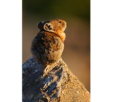 Sunset Pika Photographic Print