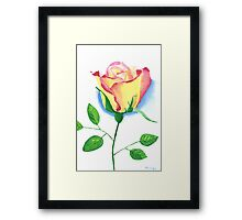 A Single Rose Framed Print