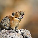 Pika Howling by William C. Gladish