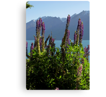 Alpine Lupins Canvas Print