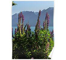 Alpine Lupins Poster
