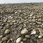 Rocky Beach by Topps