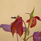 The Hover Fly by RatManDude