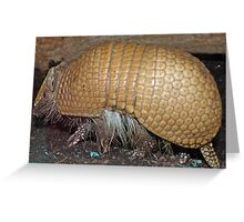 Unbelievable Armadillo