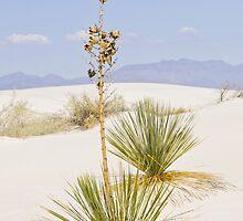 Alone in White Sands by John Weakly