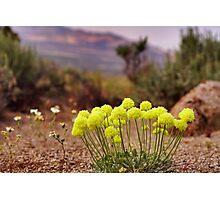 Wild flowers of Northern Nevada Photographic Print