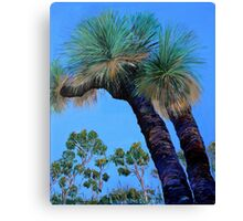 Grass Tree Cunningham's Gap Queensland  Canvas Print