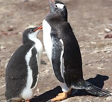 Gentoo Chick Begging by Carole-Anne