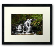 Among the Ferns Framed Print