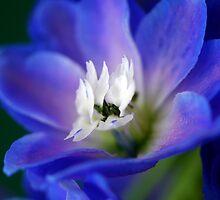 Blue Delphiniums by Renee Hubbard Fine Art Photography