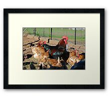 'Rohan and his girls' Framed Print