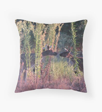 Kissing Kangaroos Throw Pillow