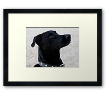 please.......... Framed Print