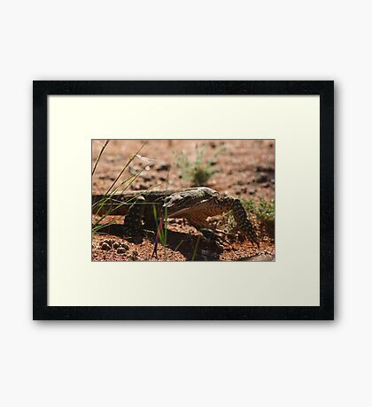 Tasting the air.... Framed Print