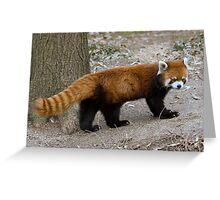 Unbelievable Red Panda Greeting Card