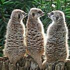 Meerkats by Rebecca Conroy